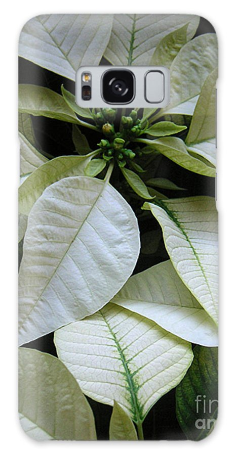 Nature Galaxy S8 Case featuring the photograph Poinsettias - Winter Whites In Contrast by Lucyna A M Green