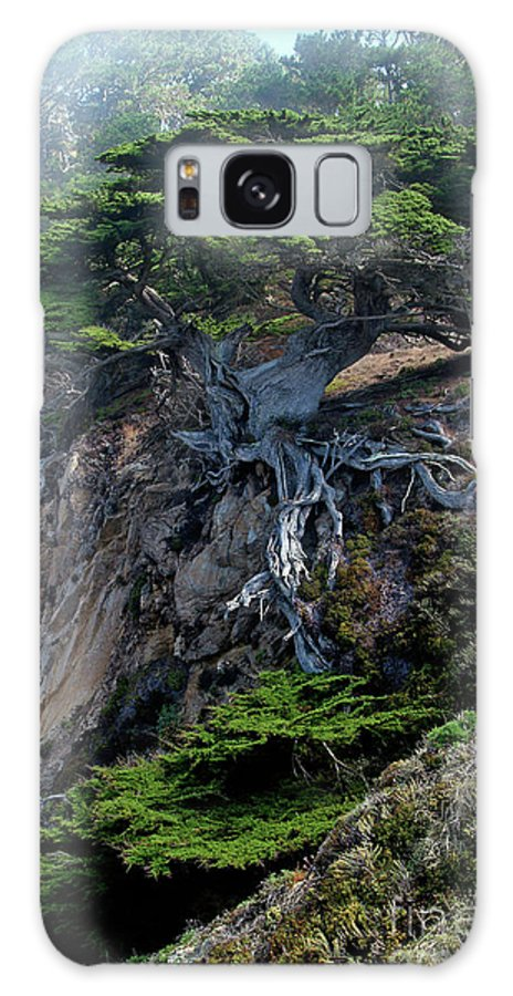 Landscape Galaxy Case featuring the photograph Point Lobos Veteran Cypress Tree by Charlene Mitchell