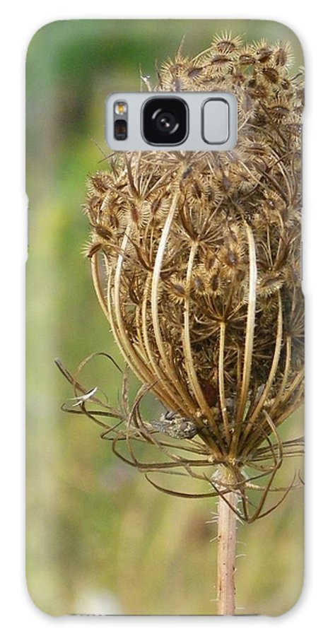 Nature Galaxy S8 Case featuring the photograph Poised For Winter by Peggy King