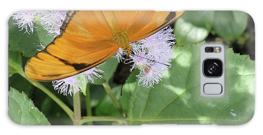 Butterfly Galaxy S8 Case featuring the photograph Poised by Trish Hale