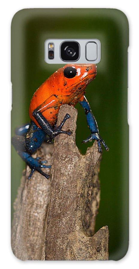 Animals Galaxy S8 Case featuring the photograph Poison Dart Frog by Rikk Flohr