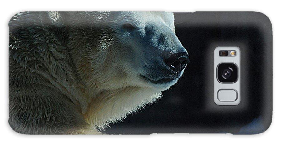 Polar Bear White Snow Alaska Zoo Galaxy S8 Case featuring the photograph Polar Bear by Galeria Trompiz
