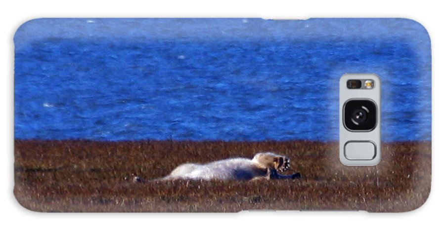 Polar Bear Galaxy S8 Case featuring the photograph Polar Bear Rolling In Tundra Grass by Anthony Jones