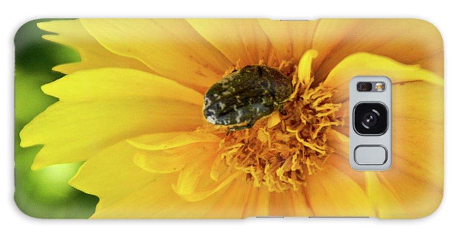 Pollen Galaxy S8 Case featuring the photograph Pollen Feeding Beetle by Douglas Barnett
