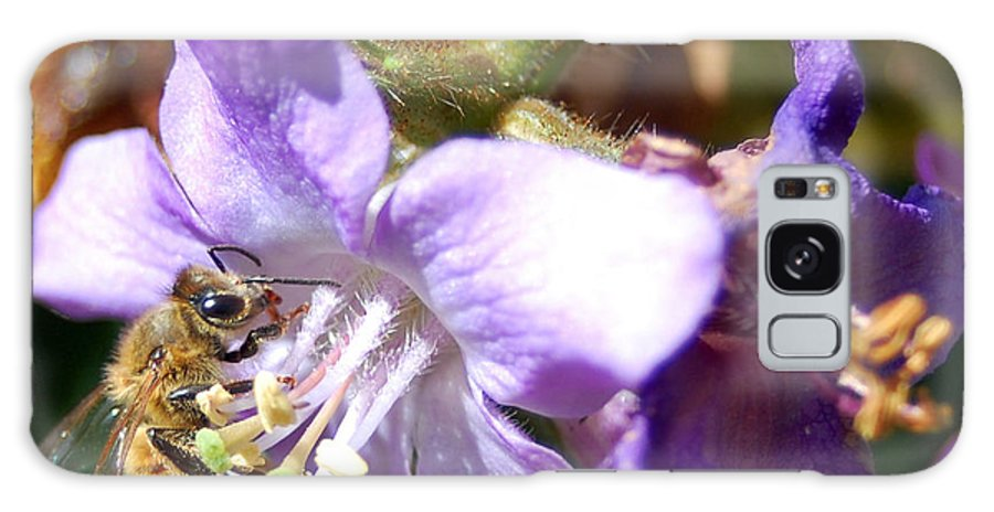 Bee Galaxy S8 Case featuring the photograph Pollinating 1 by Amy Fose