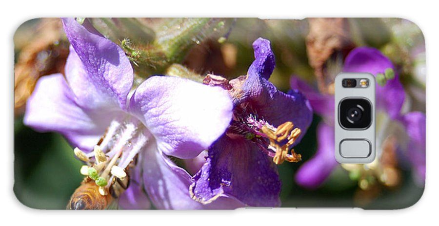 Bee Galaxy Case featuring the photograph Pollinating 3 by Amy Fose