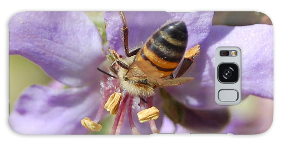 Bees Galaxy Case featuring the photograph Pollinating 4 by Amy Fose