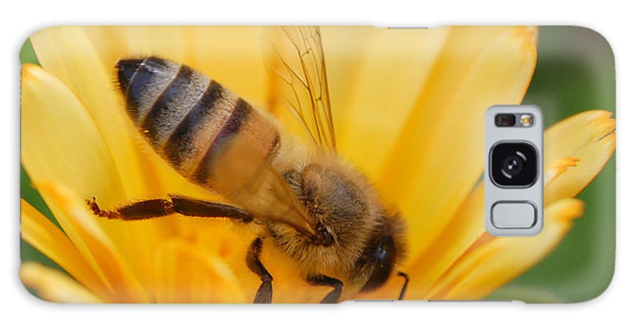 Bee Galaxy Case featuring the photograph Pollination 2 by Amy Fose