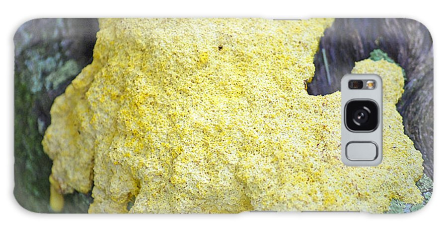 Slime Mold Galaxy S8 Case featuring the photograph Polymyxa Slime Mold by Kenneth Albin