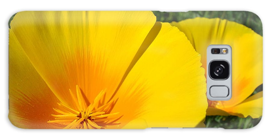 �poppies Artwork� Galaxy S8 Case featuring the photograph Poppies Art Poppy Flowers 4 Golden Orange California Poppies by Baslee Troutman