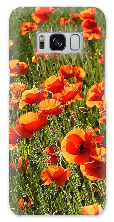Poppies Galaxy S8 Case featuring the photograph Poppies by Bob Kemp