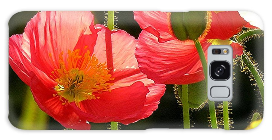 Poppy Galaxy S8 Case featuring the photograph Poppy by Diane Greco-Lesser