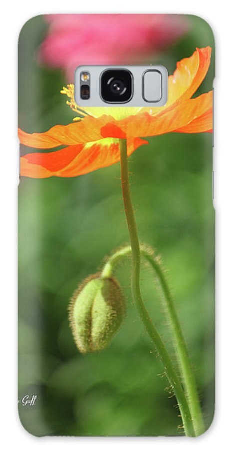 Poppy Galaxy S8 Case featuring the photograph Poppy Glow by Suzanne Gaff