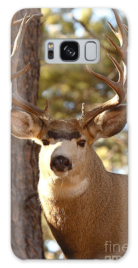 Buck Galaxy S8 Case featuring the photograph Portrait Of A 15-point Buck by Max Allen