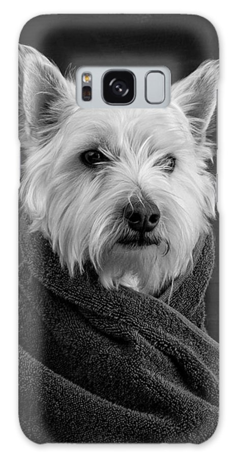 Portrait Of A Westie Dog Galaxy Case featuring the photograph Portrait Of A Westie Dog by Edward Fielding
