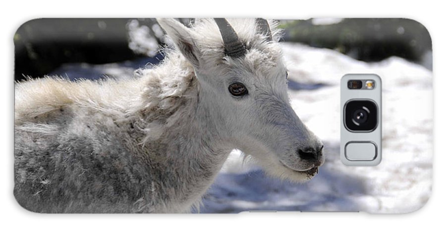 Goat Galaxy S8 Case featuring the photograph Posing Pretty by Keith Lovejoy