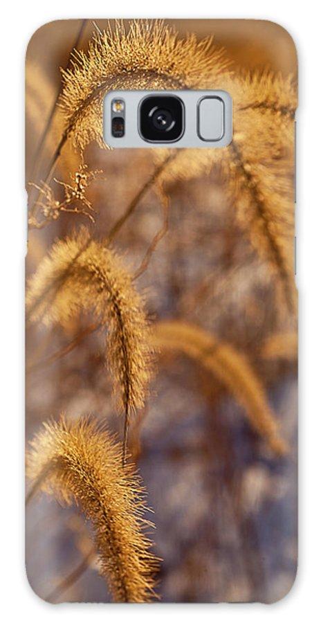 Midewin Galaxy S8 Case featuring the photograph Prairie Grass Detail by Steve Gadomski