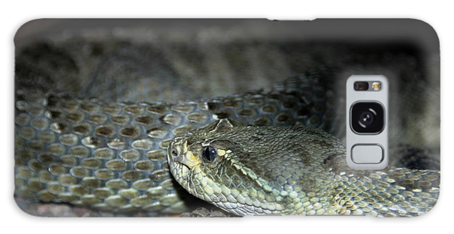 Snake Galaxy S8 Case featuring the photograph Prarie Rattle Snake by Anthony Jones