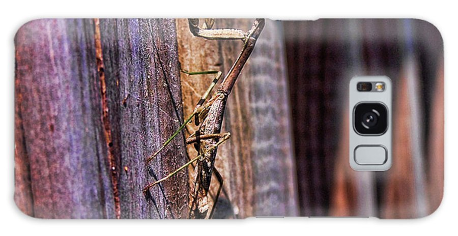 Praying Galaxy S8 Case featuring the photograph Praying Mantis by Alexander Butler
