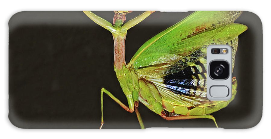 Mantis Galaxy S8 Case featuring the photograph Praying Mantis by Nicola Fusco