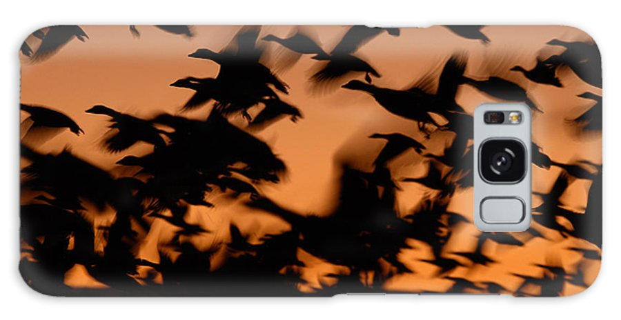 Geese Galaxy S8 Case featuring the photograph Pre-dawn Flight Of Snow Geese Flock by Max Allen