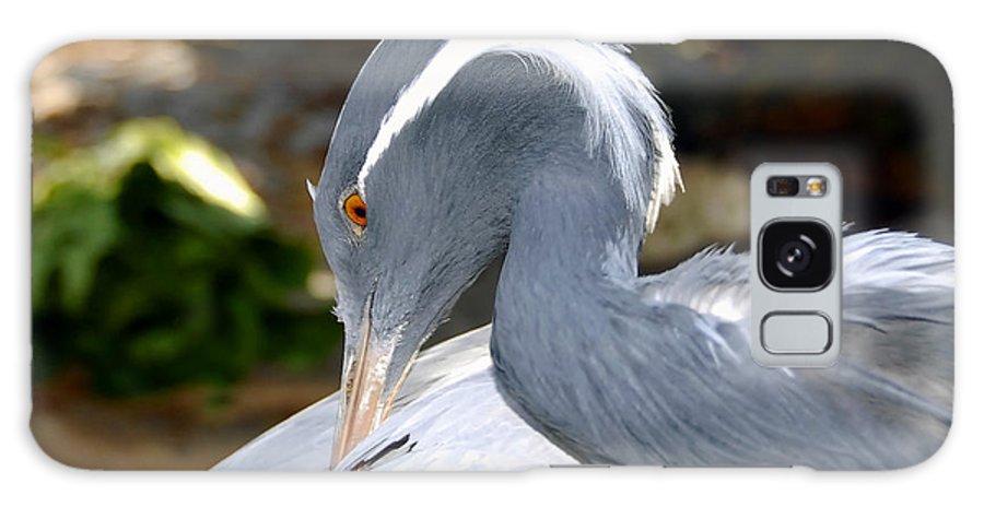Bird Galaxy S8 Case featuring the photograph Preening Bird by David Lee Thompson
