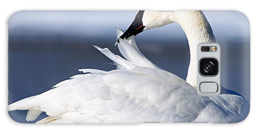 Trumpeter Swan Galaxy S8 Case featuring the photograph Preening by Larry Ricker