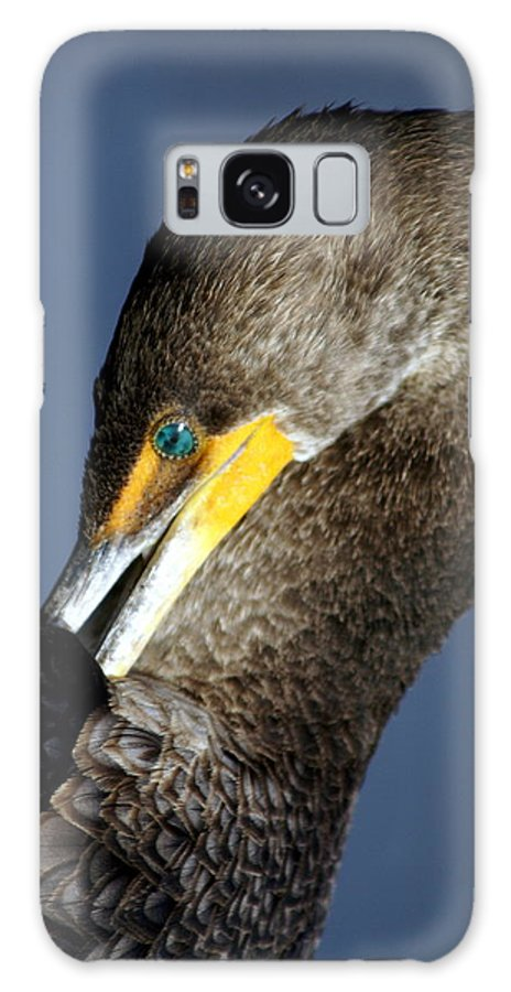 Everglades National Park Galaxy S8 Case featuring the photograph Preening by Marty Koch