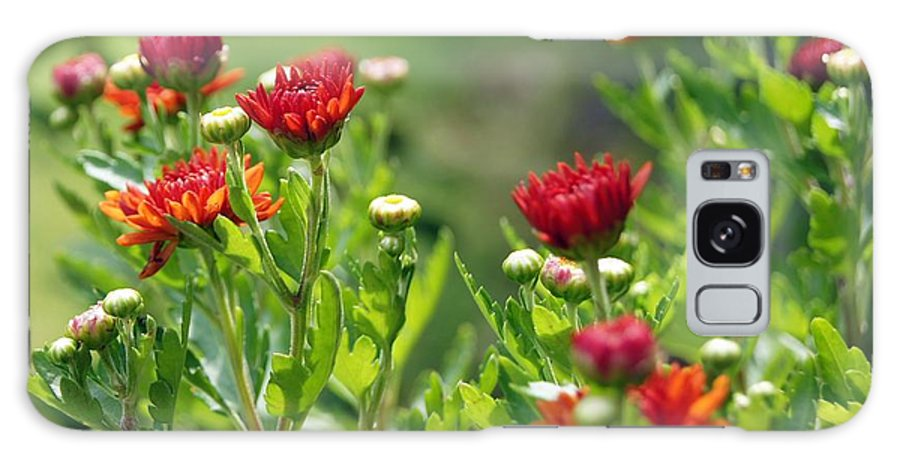 Flower Galaxy S8 Case featuring the photograph Pretty As A Picture by Kathy Bucari