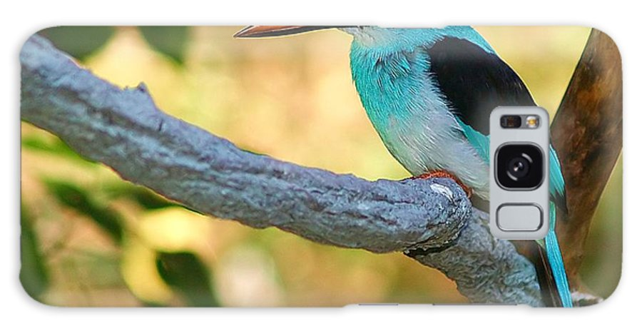 Kingfisher Galaxy Case featuring the photograph Pretty Bird by Gaby Swanson