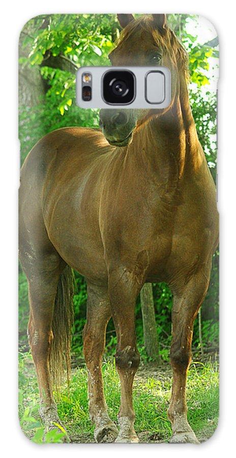 jenny Gandert Horse Chestnut Evening Light Equine Equus Gelding Chestnut Shine Mud Copper Sun Evening Light Trees Shade Cavallo Caballo quarter Horse Pasture Galaxy S8 Case featuring the photograph Pretty Boy by Jenny Gandert