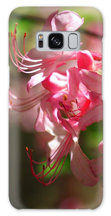 Flowers Galaxy S8 Case featuring the photograph Pretty Pink by Marty Koch