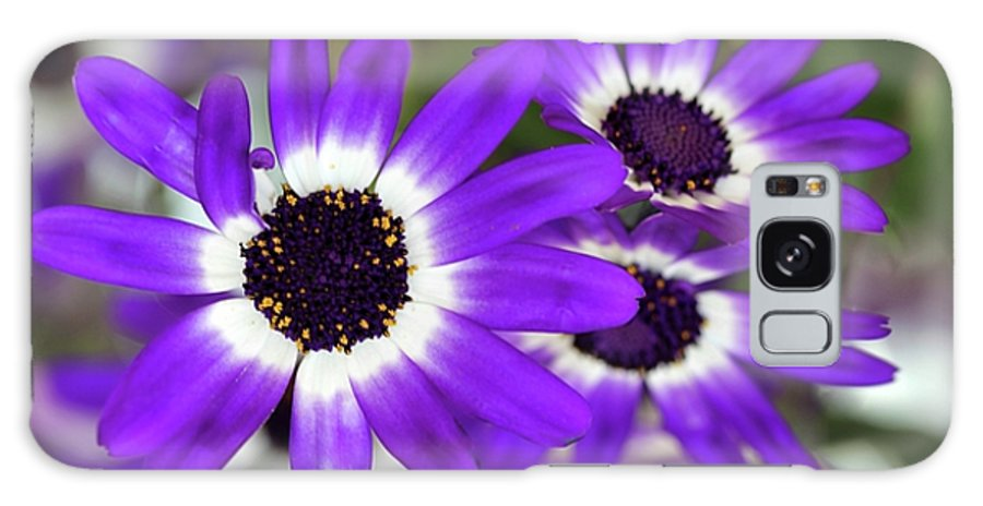 Flower Galaxy S8 Case featuring the photograph Pretty Purple Daisies by Sabrina L Ryan