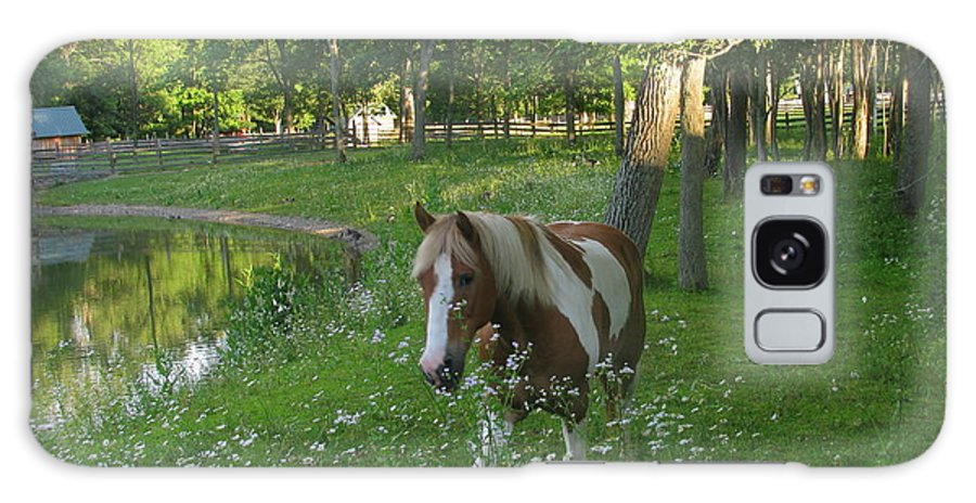 Horse Galaxy S8 Case featuring the photograph Pretty by Tammy Bullard