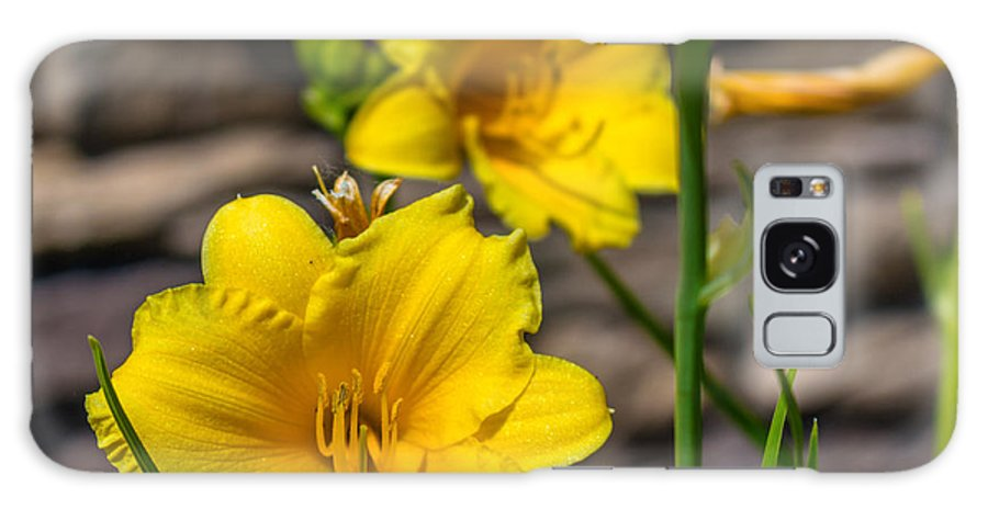 Flowers Galaxy S8 Case featuring the photograph Pretty Yellow by Tammy Bryant