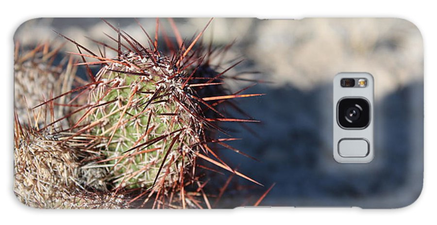 North Galaxy S8 Case featuring the photograph Prickly Pear by Nicholas Miller