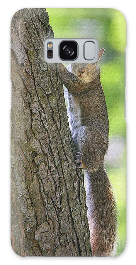 Squirrels Galaxy S8 Case featuring the photograph Prolonged Gaze by Geoff Crego