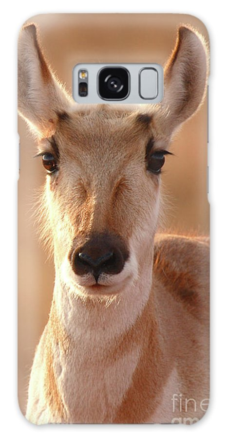 Natural Galaxy S8 Case featuring the photograph Pronghorn Antelope Doe In Soft Light by Max Allen