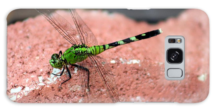 Dragonfly Galaxy S8 Case featuring the photograph Prosperity by Elizabeth Hart