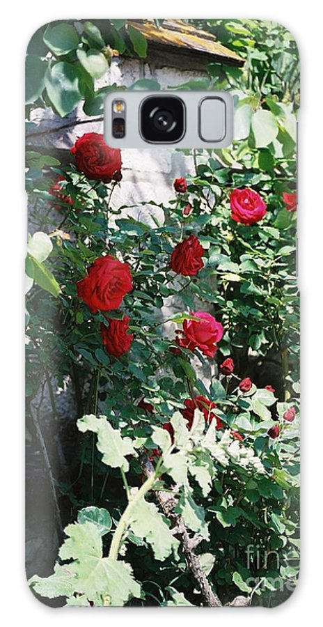 Floral Galaxy S8 Case featuring the photograph Provence Red Roses by Nadine Rippelmeyer