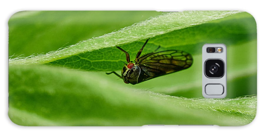 Finland Galaxy S8 Case featuring the photograph Psyllid by Jouko Lehto