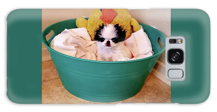 Japanese Chin Galaxy Case featuring the photograph Puppy in a Bucket, Japanese Chin by Kathleen Sepulveda