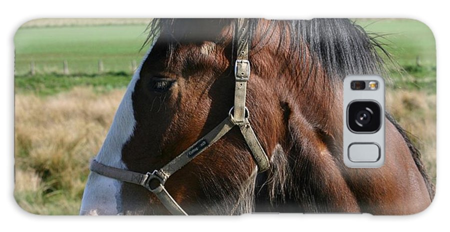 Clydesdale S Galaxy S8 Case featuring the photograph Pure Beauty by Sheila Wedegis