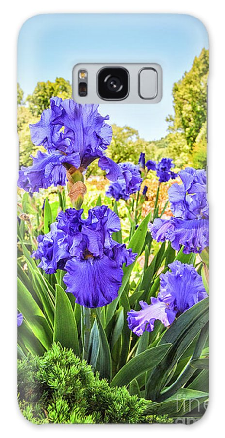 Iridaceae Galaxy S8 Case featuring the photograph Pure Sapphire Iris by Jamie Gray