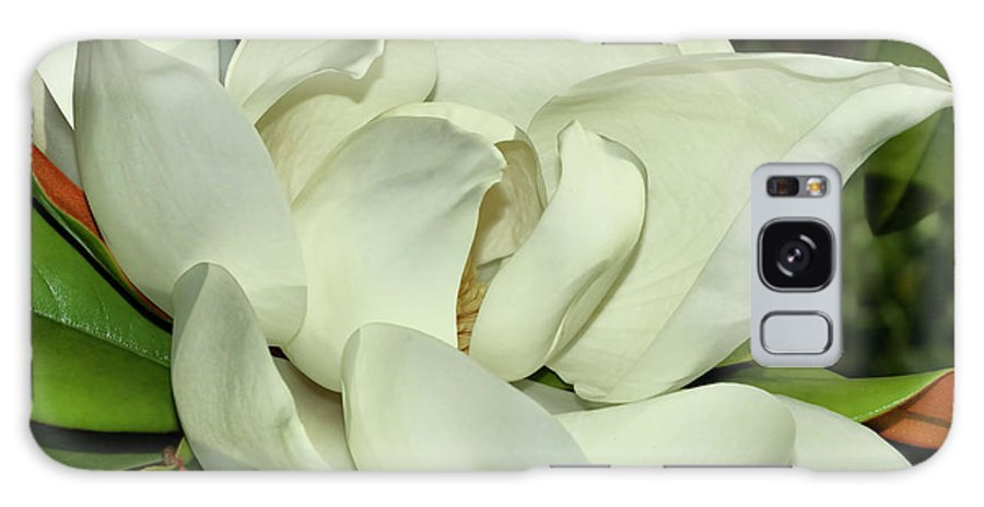 Flower Galaxy S8 Case featuring the photograph Pure White Fragrant Beauty by Deborah Benoit