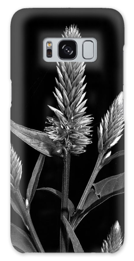 Flower Galaxy S8 Case featuring the photograph Purple - B-w by Christopher Holmes