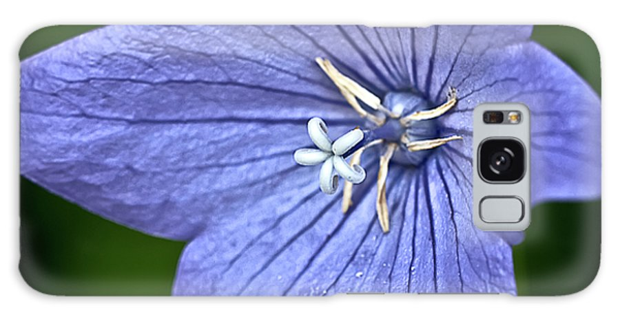 Purple Balloon Flower Galaxy S8 Case featuring the photograph Purple Balloon Flower by Onyonet Photo Studios