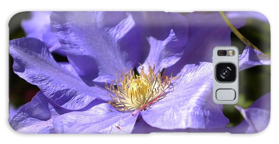 Flower Galaxy S8 Case featuring the photograph Purple Clematis by Lori Seaman