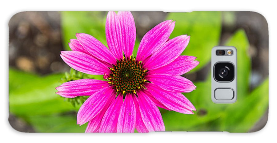 Arkansas Galaxy S8 Case featuring the photograph Purple Coneflower by Robert Kinser
