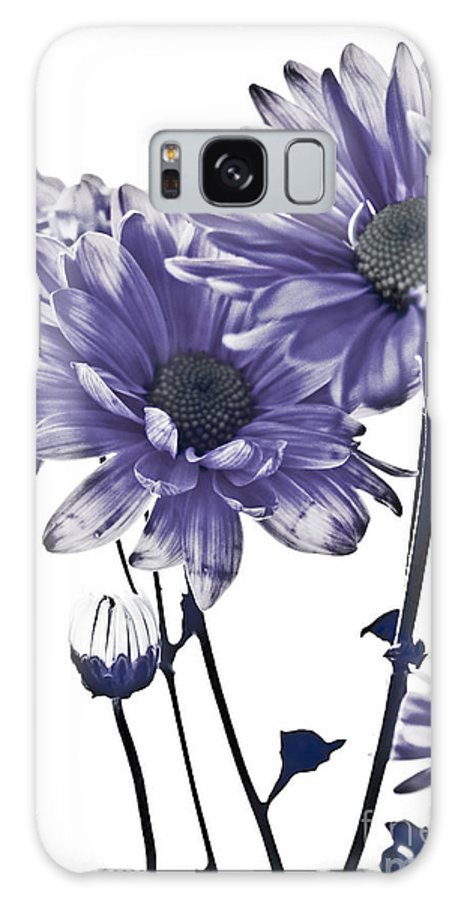 Flowers Galaxy S8 Case featuring the photograph Purple Daisies by Robin Lynne Schwind